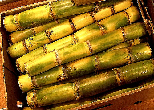 sugarcane