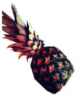 pineapple small small 2